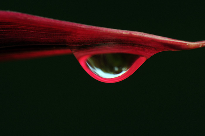 Dew with Red Frame
