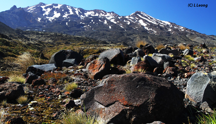 Volcanic Rock with Mount Ruapehu in the background