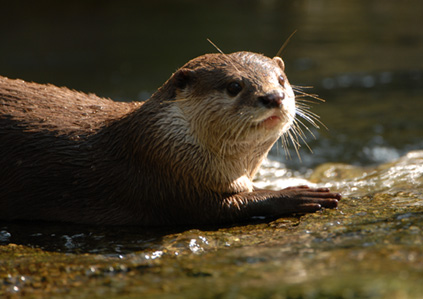 Otter_400mm_handheld