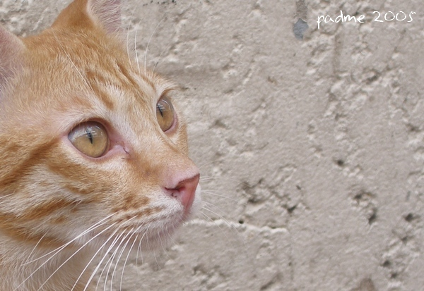 Street Cat II - Ginger
