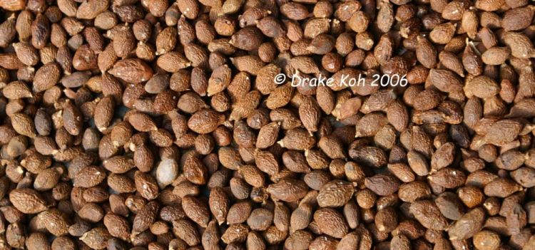 Nuts - Little India