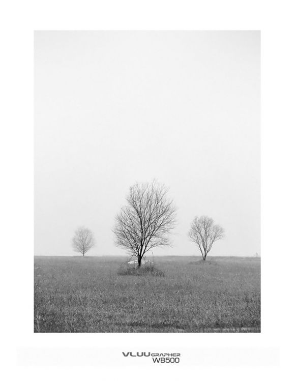 Misterious trees in the fog..