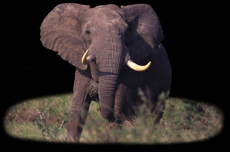 Photos of Africa, Wildlife