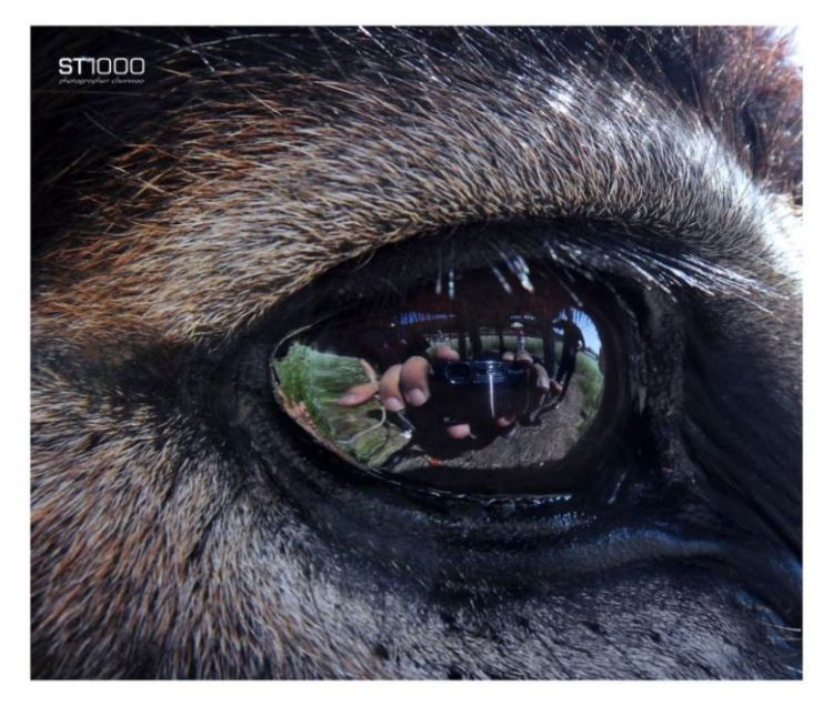 in a donkey's eye # close-up