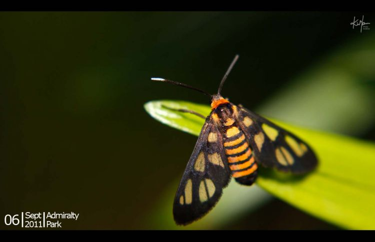 small_butterfly_01