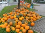 18310more_pumpkins_by_the_roadside.jpg