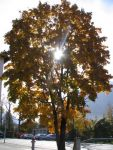18310sunrays_in_autumn.jpg