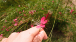 49324_48376_-_summer_wild_flowers_in_my_hand.jpg