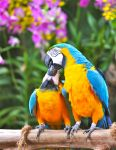 Parrot-IntimacyMomment.jpg