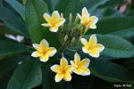 Yellow_Flower_4.jpg