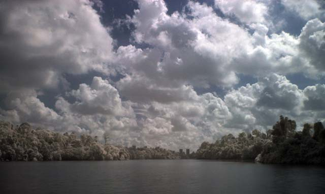 IR- View from MacRitchie