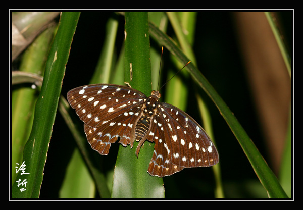 Butterfly4a