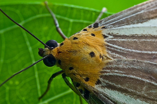 Macro - Insects