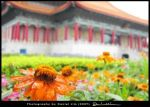 Copy_of_Photo_Landscape_Taipei_-_Flower_the_Musuem.jpg