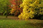 15740yello_red_green_leaves_in_the_park_Small_.jpg