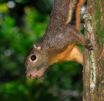 DSC_0038_squirrel.JPG
