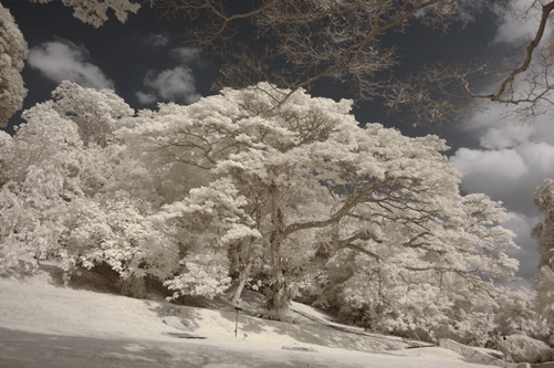 Fort Canning Park (Sat, 16 Jan 2010) - IR photos part2