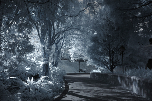 Fort Canning Park (Sat, 16 Jan 2010) - IR photos